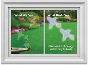 امنیت پرواز پرندگان با استفاده از برچسب های فرا بنفش